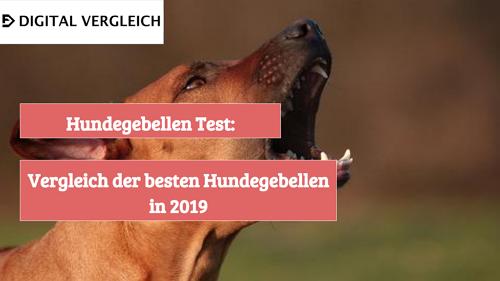 Hundegebellen Test