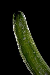 cucumber-3163704__340